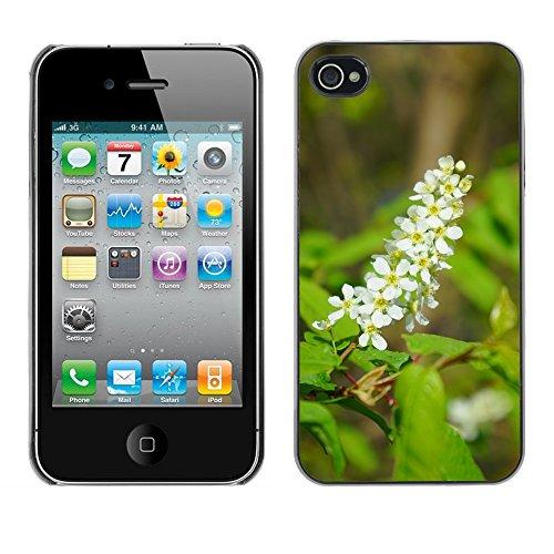 Bild Hart Handy Schwarz Schutz Case Cover Schale Etui // M00133275 Blütenstand Blumen Weiße // Apple iPhone 4 4S 4G