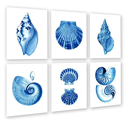 seashell pictures - 1