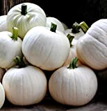 buy Cotton Candy Pumpkin 10 Seeds - NEW now, new 2020-2019 bestseller, review and Photo, best price $3.95