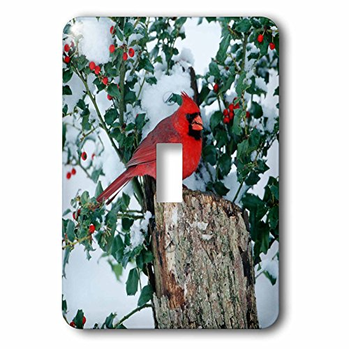 3dRose Danita Delimont - Cardinal - Northern Cardinal male on stump near China Holly in winter, IL - Light Switch Covers - single toggle switch (lsp_250901_1) ()