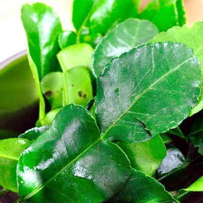 Fresh Leaf (Fresh Kaffir Lime Leaves ( Thai Lime Leaves) 2 Oz.)