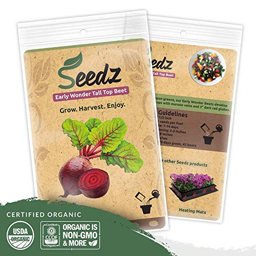 Organic Beet Seeds (APPR. 225) Early Wonder Tall Top Beet - Heirloom Vegetable Seeds - Certified Organic, Non-GMO, Non Hybrid - USA