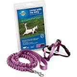PetSafe Come with Me Kitty Harness and Bungee Leash, Kitten/Small, Dusty Rose