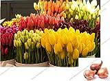 Best Flowers - Cheap! Tulip Bulbs Bulbous Root Home garden Flowers Review