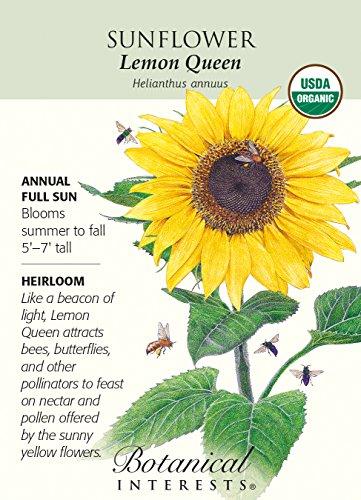 Lemon Queen Sunflower Seeds - 2 grams - Organic by Hirts: Seed; (Botanical Interests Sunflower)