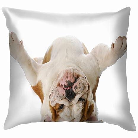 Chou_Joo_Home English Bulldog Laying Upside Down On Animals ...