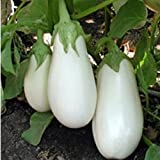 buy Rare Seeds White Eggplant Aysberg - Iceberg Organically Grown Heirloom Vegetable now, new 2018-2017 bestseller, review and Photo, best price $3.36