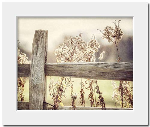 Yellow Cottage Chic Farmhouse Decor Matted 8x10 Fence Photograph (fits 11x14 frame). Soft Gold Living Room or Bedroom Wall Art ()