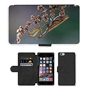 """Super Stella Cell Phone Card Slot PU Leather Wallet Case // M00145904 Praying Mantis Insect Macro Nature // Apple iPhone 6 4.7"""""""
