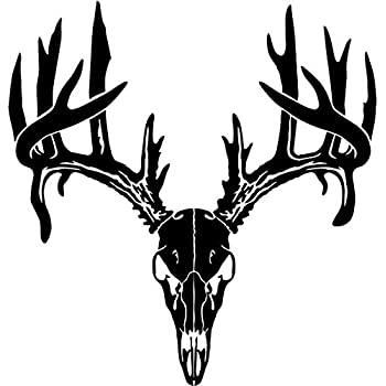 Amazon.com: Team Mathews Full Skull with Antlers Whitetail - White ...