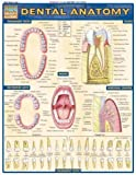 Dental Anatomy: Reference Guide (Quickstudy: Academic) by BarCharts, Inc. (2004) Pamphlet