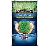 Pennington 100526658 Smart Seed, Green