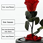 MAYMII-100-Handmade-Preserved-Never-Withered-Real-Rose-Flower-With-Real-Fallen-Petals-in-Luxury-Glass-Dome-Gift-for-LoverValentines-Day-Birthday-Wedding-Inspired-By-Beauty-And-The-Beast
