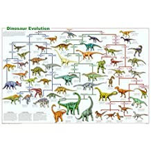 Dinosaur Evolution Educational Science Chart Poster Collections Poster Print, 36x24