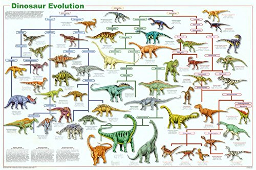 Laminated Dinosaur Evolution Educational Science Chart Poster 36 x 24in ()