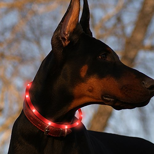 BSEEN Led Dog Collar USB Rechargeable Glowing Pet Safety Collars Water Resistant Light up Cut to resize to fit 11″-27″ for Small, Medium, Large Dogs
