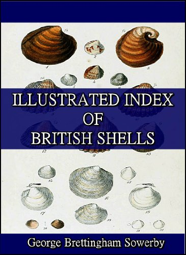 (Illustrated Index of British Shells : Containing figures of all the recent species)