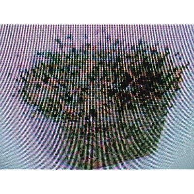 """Grandiosy Farm Organic""""Alfalfa Sprouts"""" Seeds Grow Your OWN : Garden & Outdoor"""