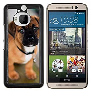 EJOOY---Cubierta de la caja de protección para la piel dura ** HTC One M9Plus M9+ M9 Plus ** --Cachorro de perro mastín Bull lindo del animal doméstico