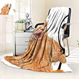 vanfan Heavy Blanket Winter Cat Looking into The Mirror Seeing a Reflection a Lion Digital,Silky Soft,Anti-Static,2 Ply Thick Blanket. (90''x70'')