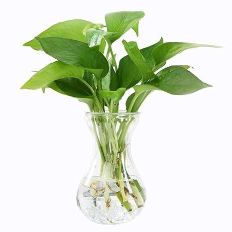 Skyeye 3Pcs Florero de Vidrio Transparente Adecuado para Jacinto Macetas de Plantas Acuáticas Hidropónicas Oficina de