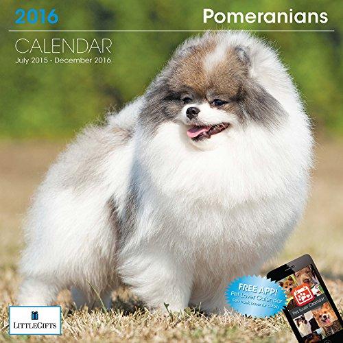 LittleGifts Pomeranian 2016 Calendar (1253)