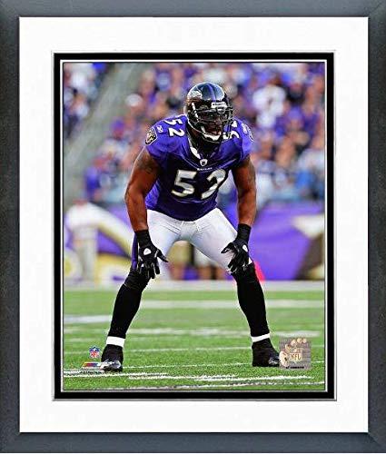 Ray Lewis Baltimore Ravens Action Photo (Size: 12.5