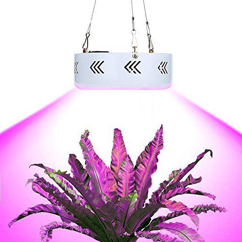 African Violet Led Light in US - 9
