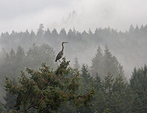 Great Blue Heron Misty Mountains Forest Fine Art Nature Photography Print - Bird Art 8.5 x - Bird Photography Nature
