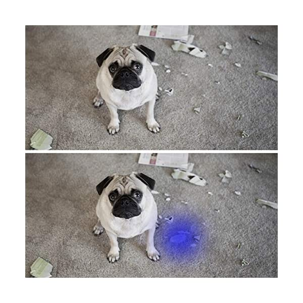 Black Light UV Flashlight UV Light,Vansky Blacklight 12 LED Urine Detector For Dog/Cat/Pet Urine & Dry Stains and Bed Bug On Carpets/Rugs/Floor,Matching with Pet Odor Eliminator 4