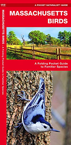 Massachusetts Birds: A Folding Pocket Guide to Familiar Species (A Pocket Naturalist Guide) (Pocket Star Ri)