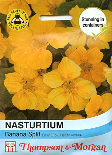 Nasturtium Banana Split 25 Flower Seeds/Window Boxes, containers & Ground Cover