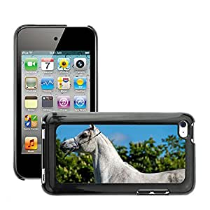 Hot Style Cell Phone PC Hard Case Cover // M00046684 arabian horses horse animals // Apple iPod Touch 4 4G 4th