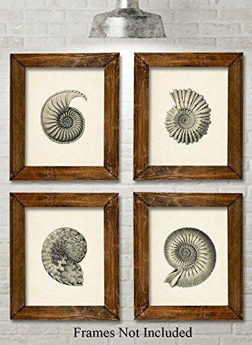 Nautilus Art Prints - Set of Four Photos (8x10) Unframed - Makes a Great Gift Under $20 for Beach House or Bathroom Decor