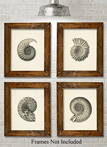 (Nautilus Art Prints - Set of Four Photos (8x10) Unframed - Makes a Great Gift Under $20 for Beach House or Bathroom Decor)