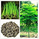 25 Organic Seeds of The Tree of Life - The Moringa Tree - Superfood, Easy to Grow, Fast Growing Tree with Edible Leaves, Stems, Seeds - Marde Ross & Company