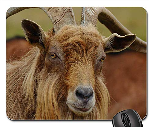 Mouse Pad - Billy Goat Mountain Goat Goat Fur Horns Brown