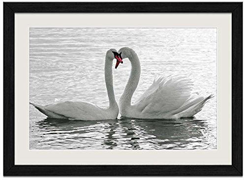 Two Swans - Art Print Wall Black Wood Grain Framed - Pictures Black Swans