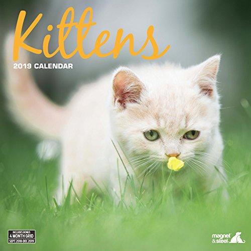 Imán & Calendario 2019 de gato de acero tradicional (9091)