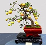 New Bonsai Apple Tree Seeds Apple 50+ PCS Seeds
