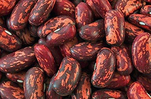 Spanish Tolosana Bean Seeds a.K.a, Prince Bean, Phaseolus vulgaris-, Heirloom Red Bush Bean! (50 Seeds) by ThronesFarm