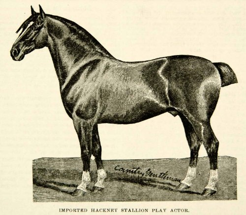 1893 Print Imported Hackney Stallion Play Actor Horse Equestrian Animal Clipped - Original Halftone Print from PeriodPaper LLC-Collectible Original Print Archive