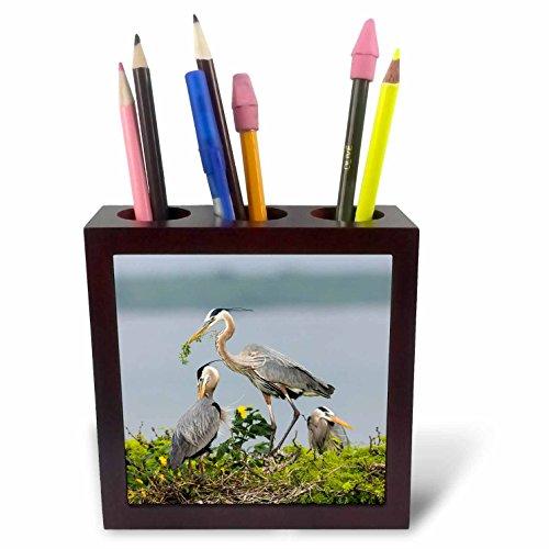 Strutting Gobblers - 3dRose Rio Grande Wild Turkey Gobbler Strutting, Starr Co, Texas Tile Pen Holder 5