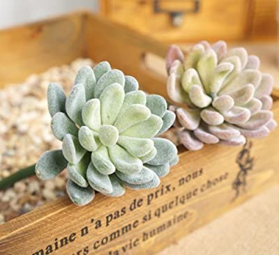Neomark Assorted Home Garden Artificial Succulent Flower Plants With Hair Unpotted (2 different colors)