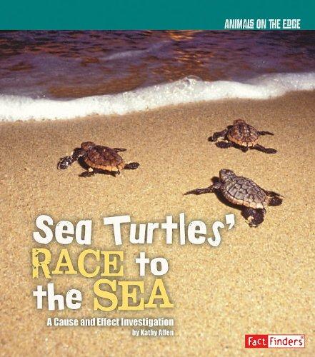 Sea Turtles' Race to the Sea (Animals on the (Turtles Race)