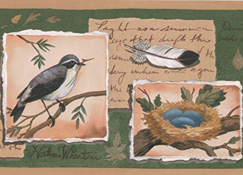 Bird Nest Egg on Postage Stamps Green Wallpaper Border Retro Design, Roll 15' x 7'' ()