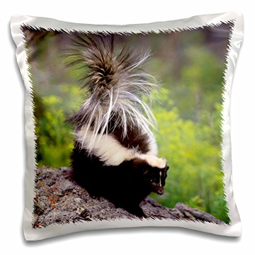 3dRose pc_92146_1 North America, USA, Montana. Skunk wild...