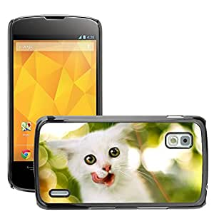 Hot Style Cell Phone PC Hard Case Cover // M00046252 pets animals kitten white // LG NEXUS 4