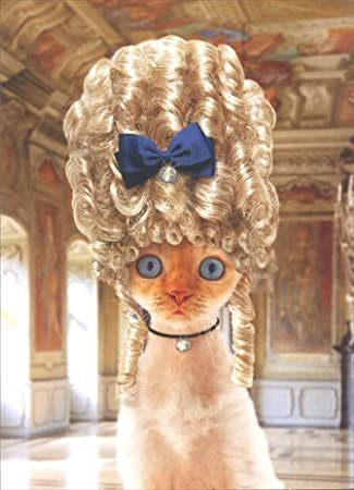 Amazon Cat In Old Fashioned Wig Birthday Card Office Products