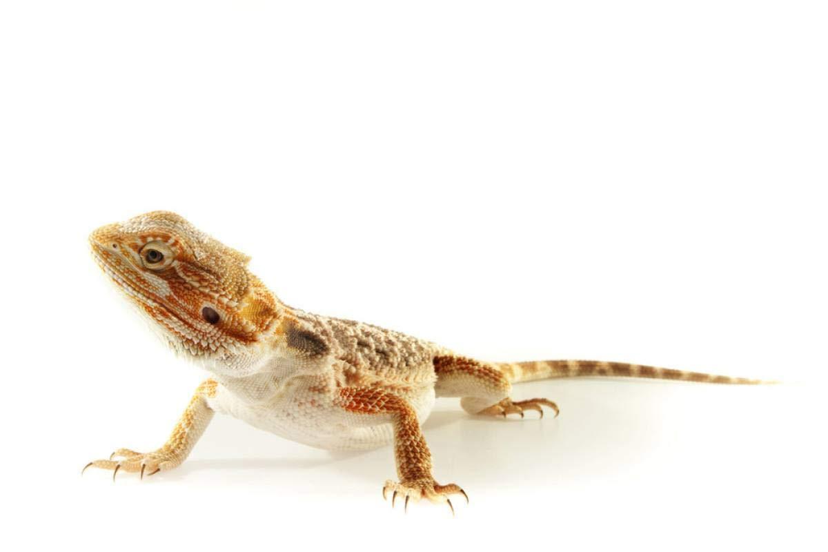 11lbs Bulk Non-GMO Dried Mealworms for Reptile, Tortoise ; Amphibian,Lizard ;Wild Birds; Chichens; Duck etc 5